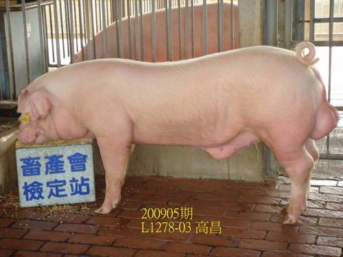 中央畜產會200905期L1278-03拍賣照片