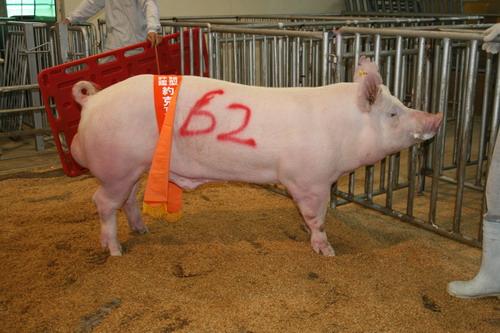 中央畜產會200905期Y0173-03拍賣照片(高價豬)