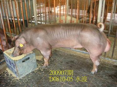 中央畜產會200907期D0810-05拍賣照片