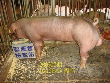 中央畜產會200907期D1158-03拍賣照片