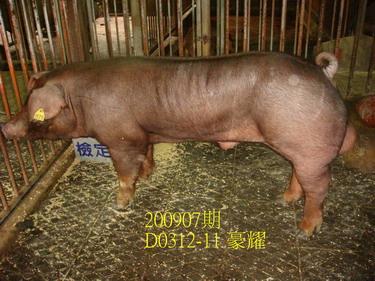 中央畜產會200907期D0312-11拍賣照片