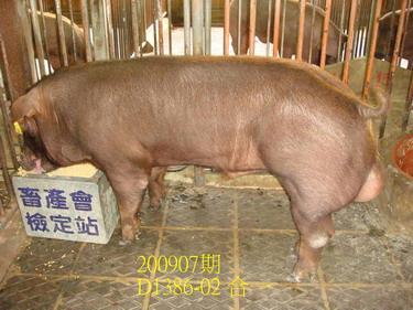 中央畜產會200907期D1386-02拍賣照片