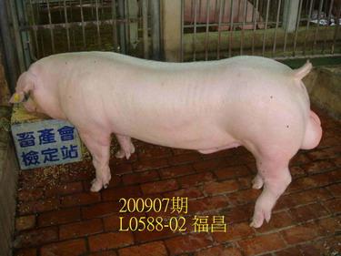 中央畜產會200907期L0588-02拍賣照片