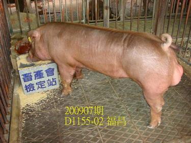 中央畜產會200907期D1155-02拍賣照片