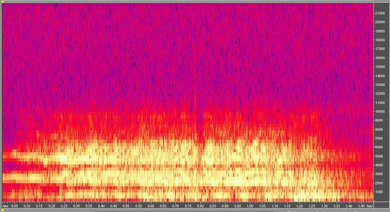 種原鳴叫聲-頻譜圖-小型馬