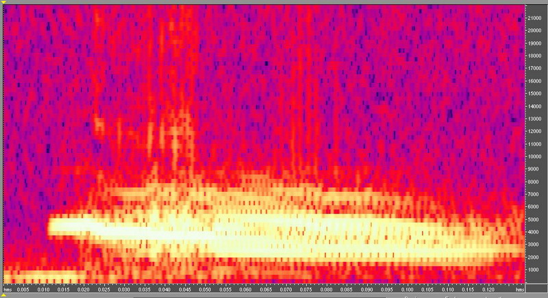 種原鳴叫聲-頻譜圖-小雞