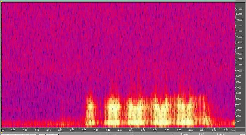 種原鳴叫聲-頻譜圖-山羊