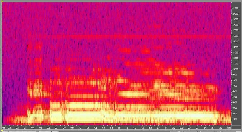 種原鳴叫聲-頻譜圖-公雞