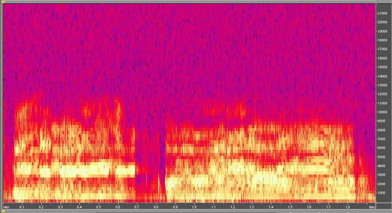 種原鳴叫聲-頻譜圖-仔豬