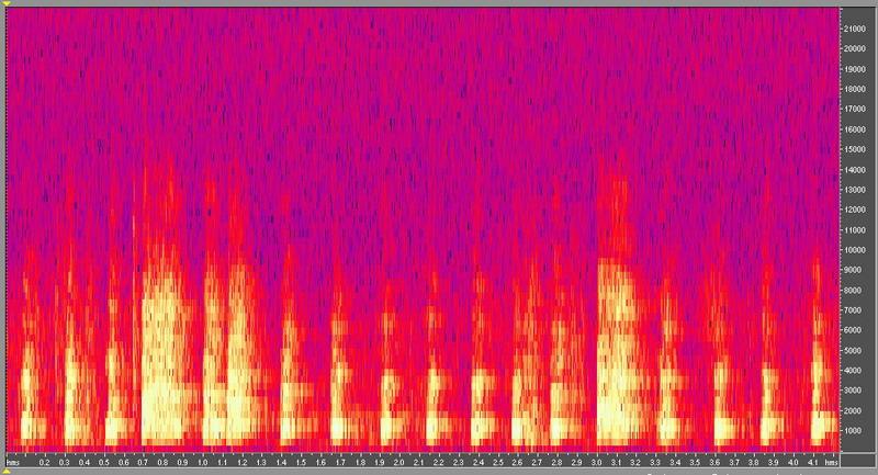 種原鳴叫聲-頻譜圖-母雞