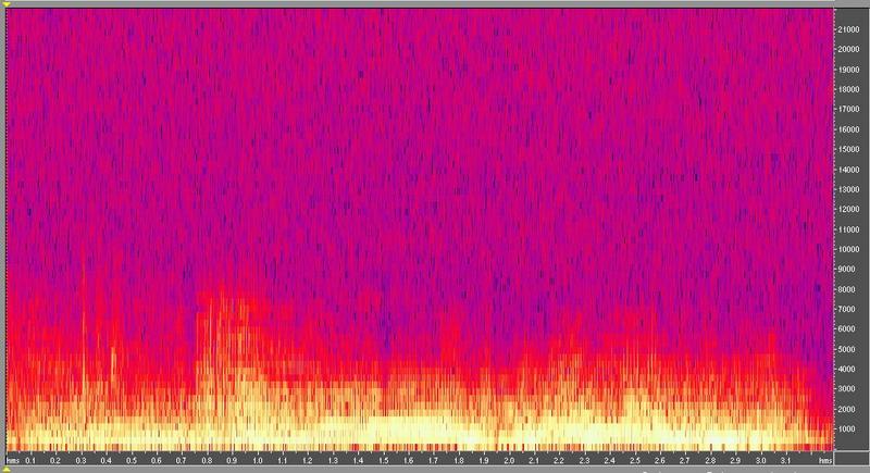 種原鳴叫聲-頻譜圖-荷蘭仔牛