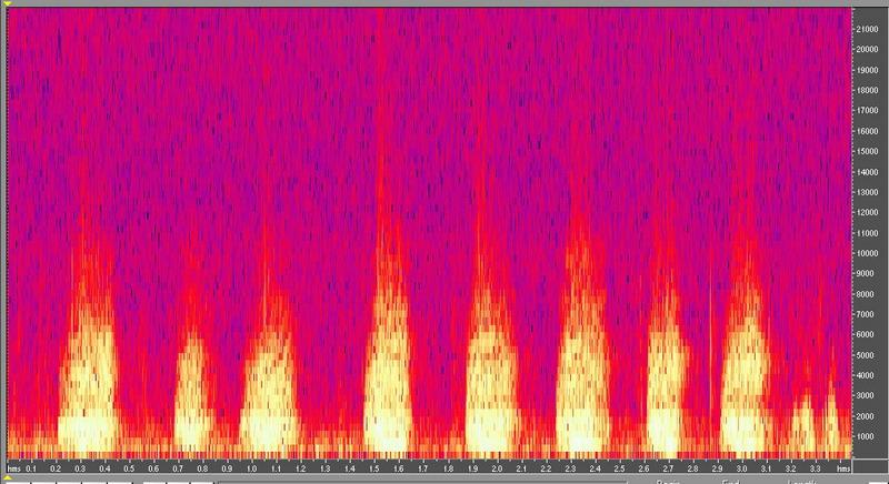 種原鳴叫聲-頻譜圖-番鴨成鴨