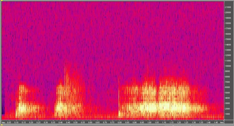 種原鳴叫聲-頻譜圖-菜鴨