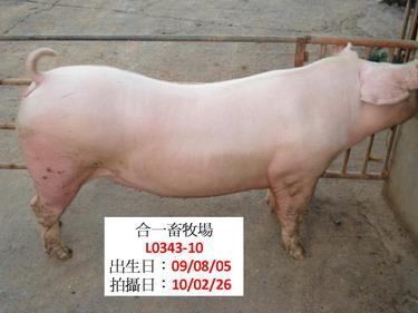 台灣種豬發展協會9902期L0343-10側面相片