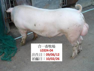 台灣種豬發展協會9902期L0324-04側面相片