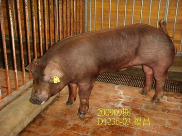 中央畜產會200909期D1236-03拍賣照片
