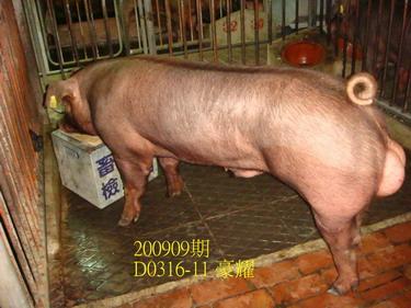 中央畜產會200909期D0316-11拍賣照片