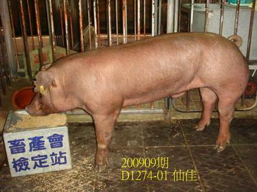 中央畜產會200909期D1274-01拍賣照片