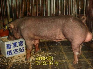 中央畜產會200909期D1460-03拍賣照片