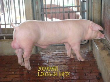 中央畜產會200909期L0036-04拍賣照片