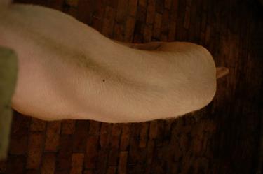 中央畜產會200909期L1854-03體型-體軀相片