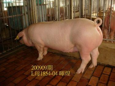 中央畜產會200909期L1854-04拍賣照片