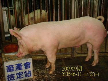 中央畜產會200909期Y0546-11拍賣照片