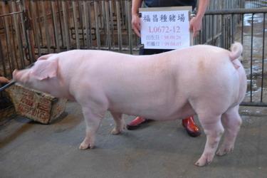 台灣種豬發展協會9903期L0672-12側面相片