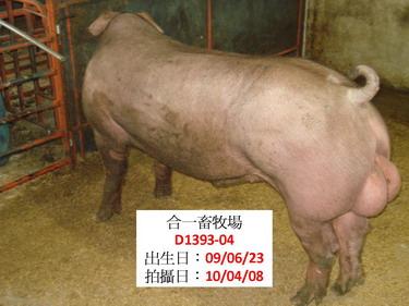 台灣種豬發展協會9903期D1393-04側面相片