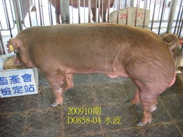 中央畜產會200910期D0858-04拍賣照片