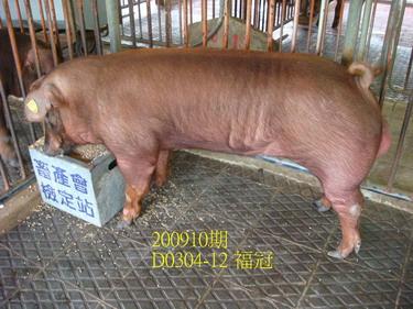 中央畜產會200910期D0304-12拍賣照片