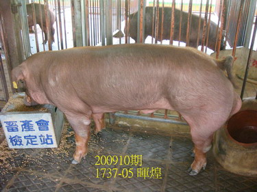 中央畜產會200910期D1737-05拍賣照片