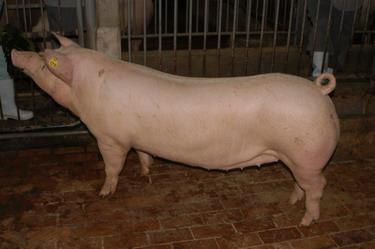 中央畜產會200910期L0657-10體型-全身相片