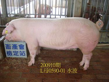 中央畜產會200910期L0590-01拍賣照片