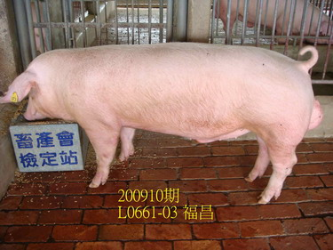 中央畜產會200910期L0661-03拍賣照片