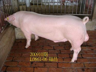中央畜產會200910期L0661-06拍賣照片