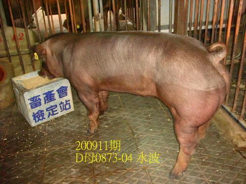 中央畜產會200911期D0873-04拍賣照片