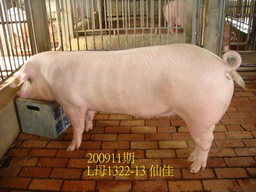 中央畜產會200911期L1322-13拍賣照片