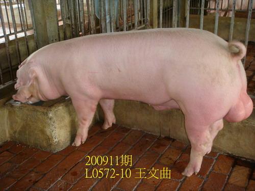 中央畜產會200911期L0572-10拍賣照片