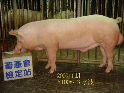 中央畜產會200911期Y1008-13拍賣照片