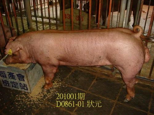 中央畜產會201001期D0861-01拍賣照片