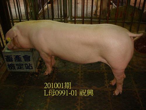 中央畜產會201001期L0991-01拍賣照片
