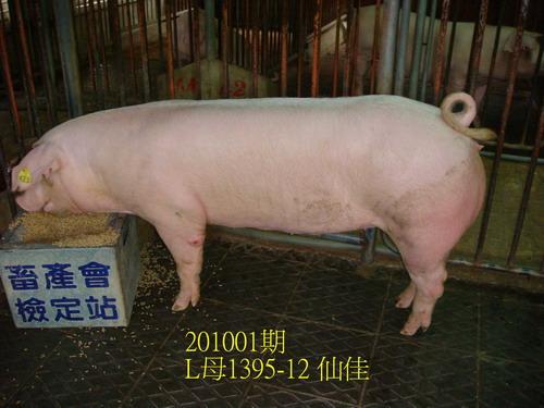 中央畜產會201001期L1395-12拍賣照片