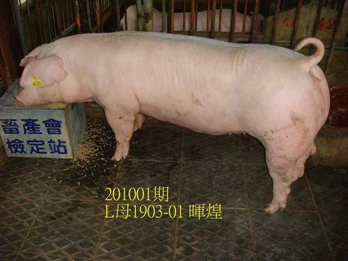 中央畜產會201001期L1903-01拍賣照片