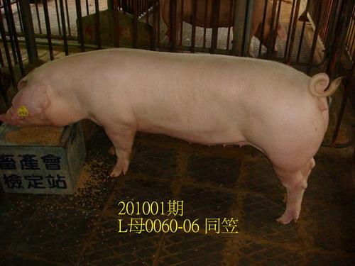 中央畜產會201001期L0060-06拍賣照片