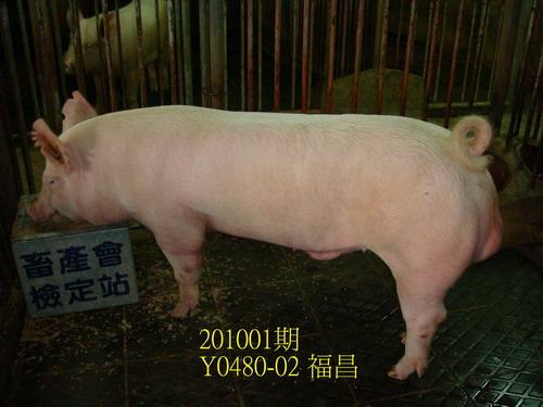 中央畜產會201001期Y0480-02拍賣照片
