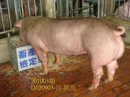 中央畜產會201003期D0903-10拍賣照片