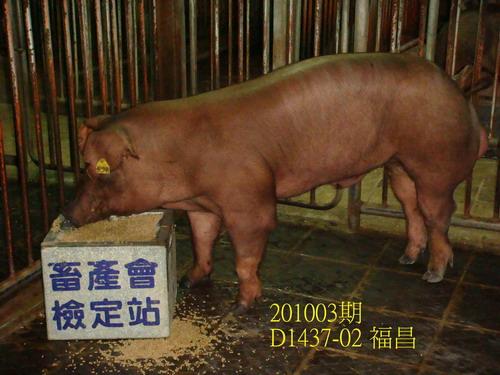 中央畜產會201003期D1437-02拍賣照片