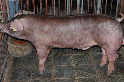 中央畜產會201003期D0344-01體型-全身相片