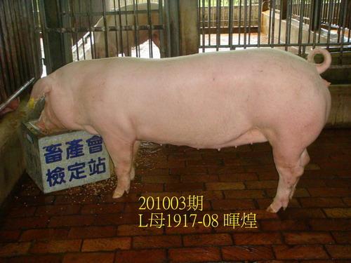 中央畜產會201003期L1917-08拍賣照片